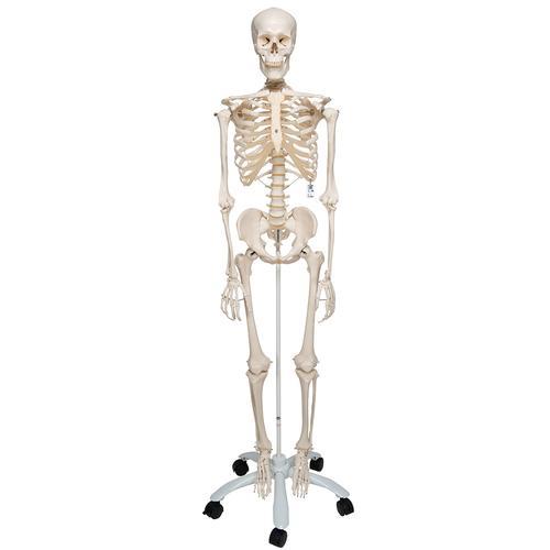 Esqueleto Stan A10, sobre apoio de 5 pés de rodinha - 1020171 - A10 ...