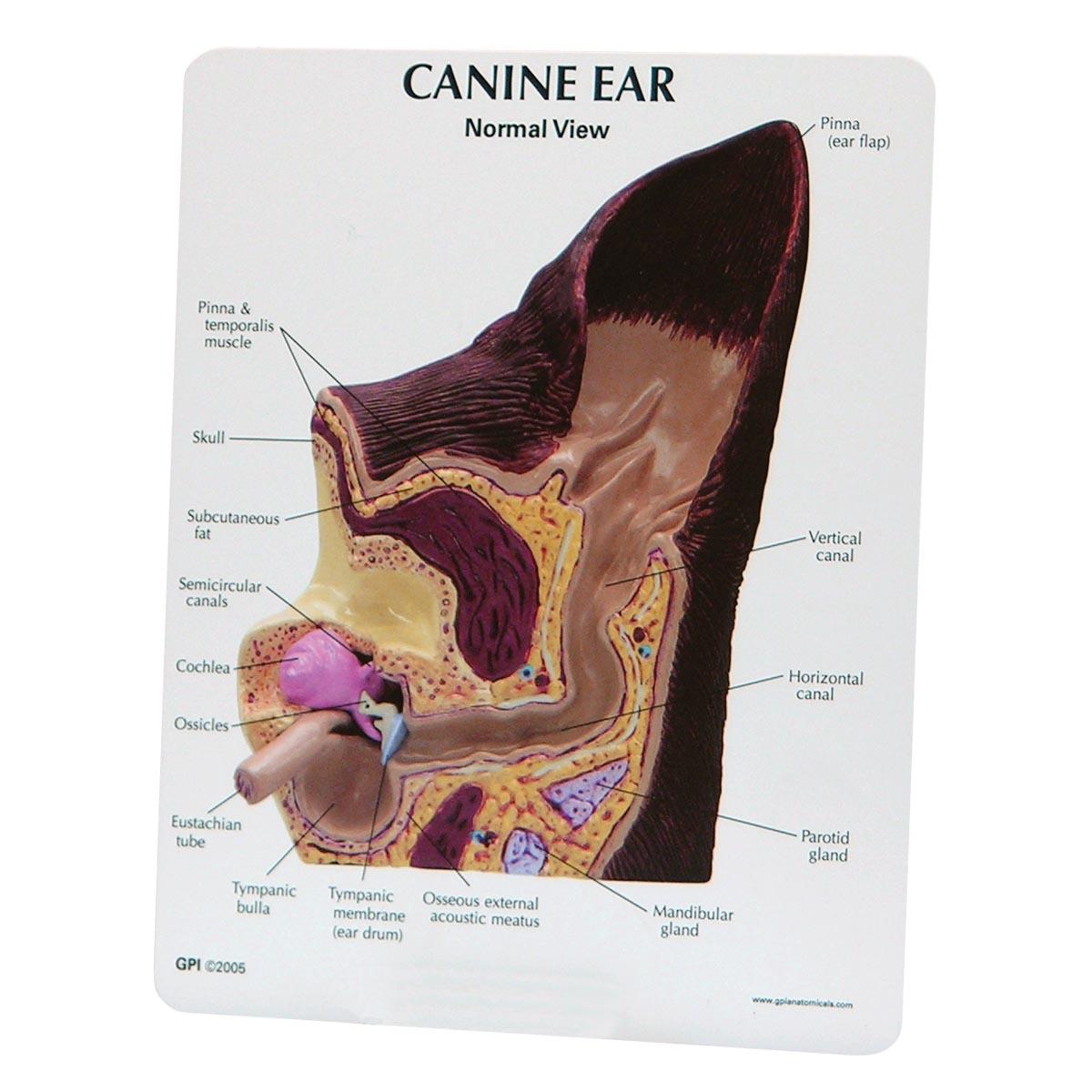 Dog Ear Cartilage Damage
